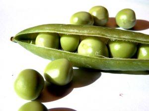 winter-peas